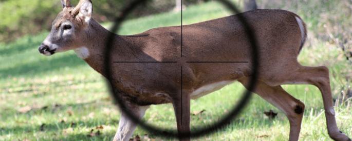 Shoot a Dear with crossbow